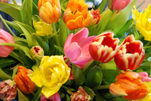 tulpen kleur